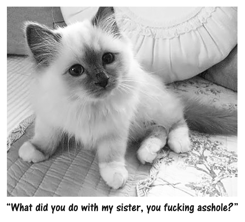 """""""Here kitty kitty kitty""""………… """"Where's my sister you big asshole?"""""""