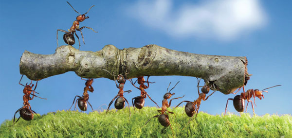 Ants! The strongest little critters on our planet