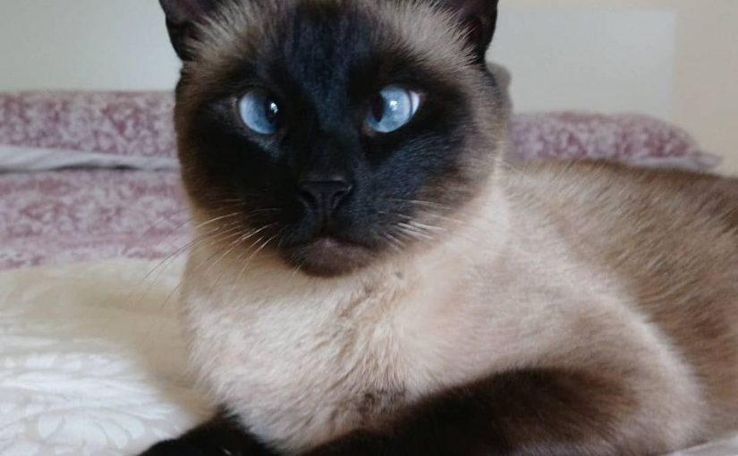 Don't blame me, I worship the next-door neighbor's Siamese Cat